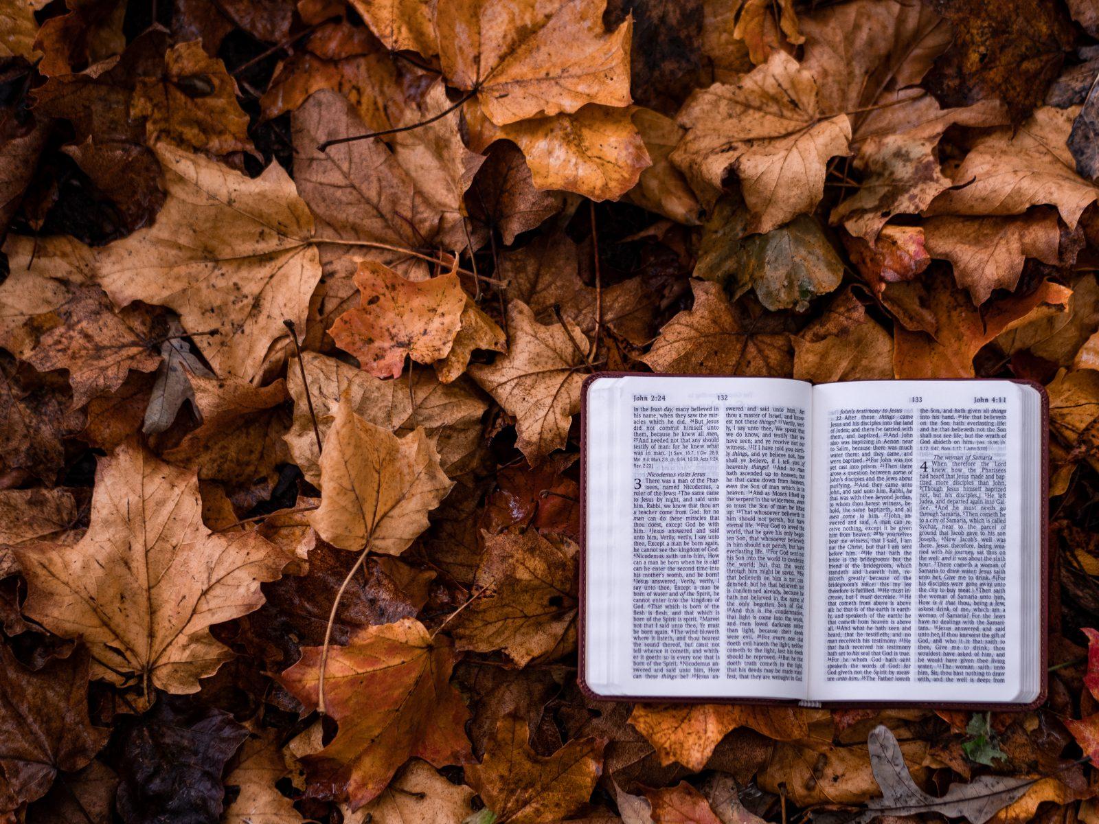 Reflexiones de Esperanza: Enseñanzas en la cueva-  Parte 13: El temor de Dios y el valor de la meditación
