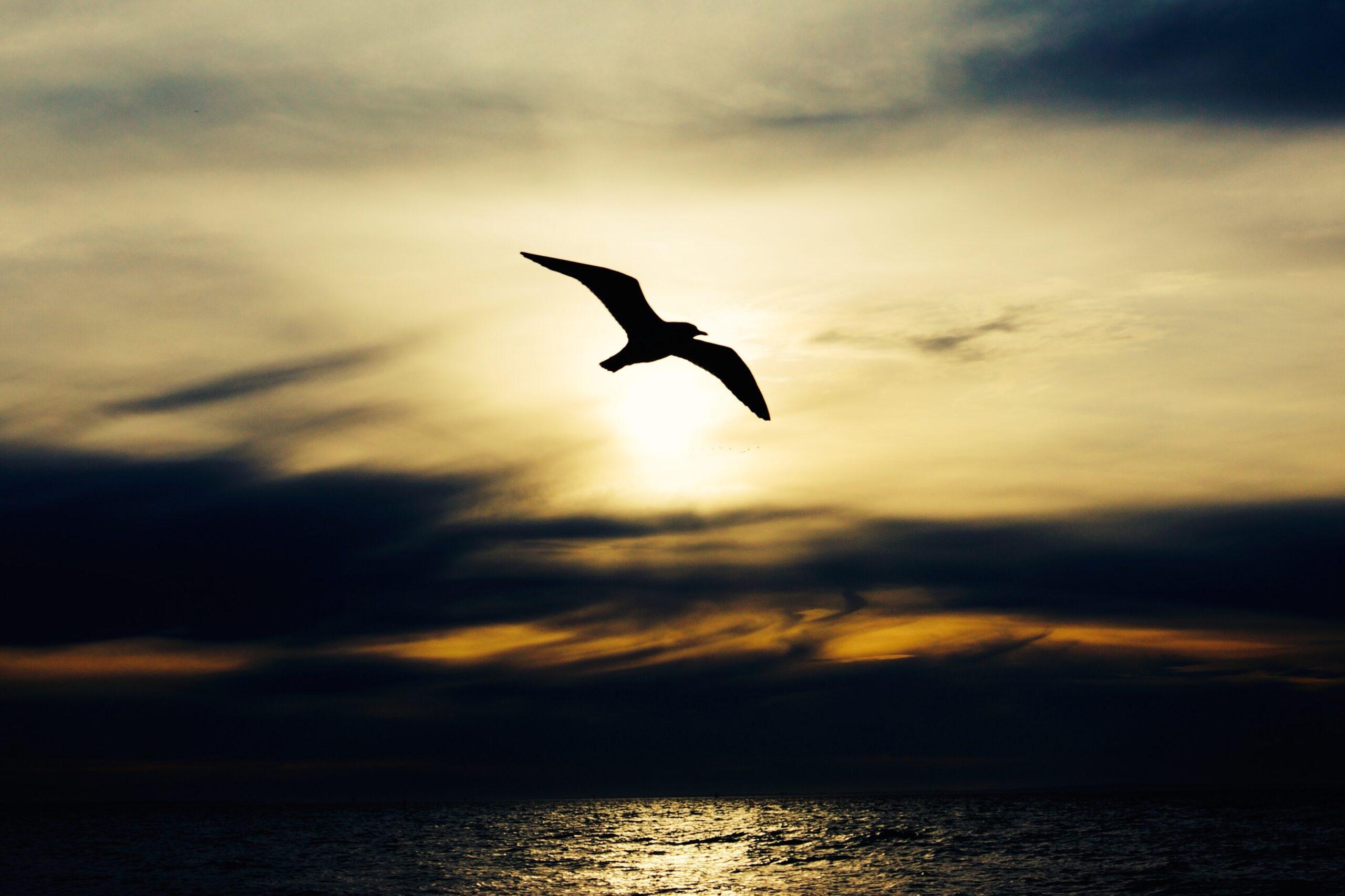 silhouette of bird in flight