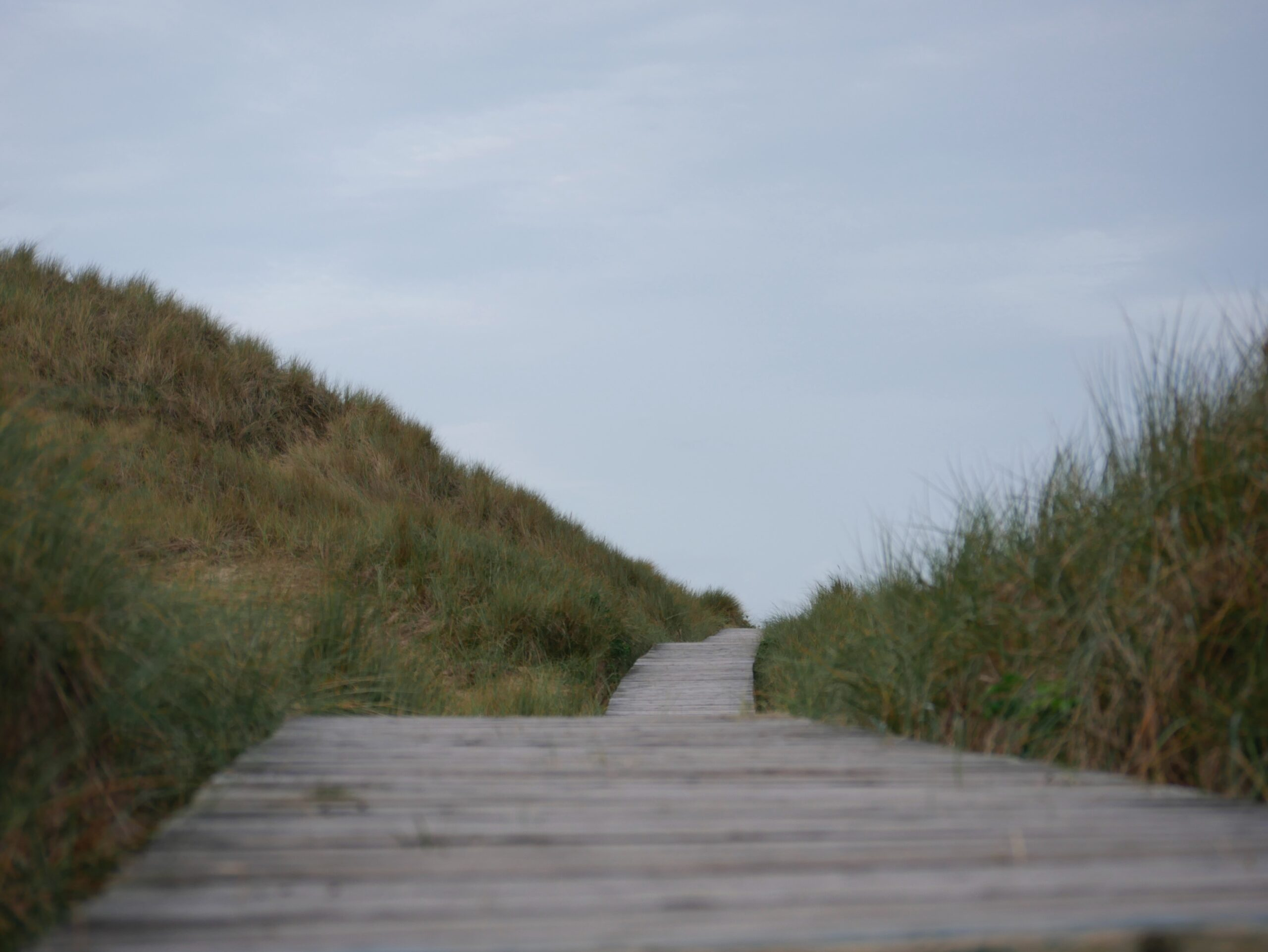 gray wooden pathway between green grass field under white sky during daytime