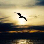 Reflexiones de Esperanza: La fuente que nos capacita para ver más allá de la aflicción