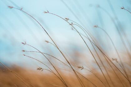 focus photography of brown plants